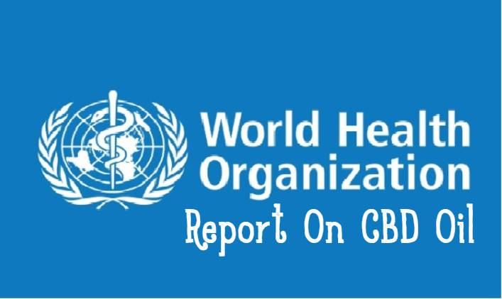 cbd oil who report -WHO Report Finds No Public Health Risks Or Abuse Potential For CBD